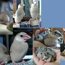 小鳥たちのようす(その3)