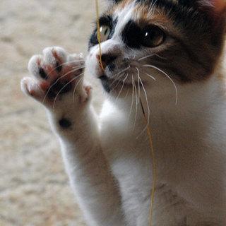 癒し系のかわいい三毛猫です