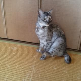 至急!愛らしい子猫の里親になってください!