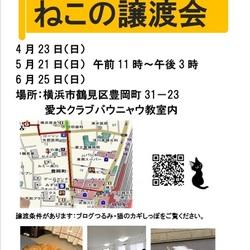 横浜 つるみ・猫のカギしっぽ譲渡会vol.33 開催します(室内)