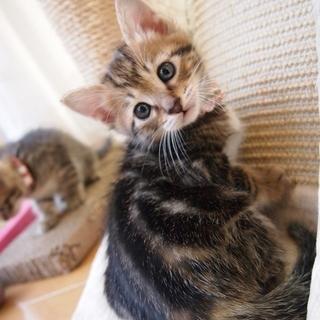 美猫6兄妹「ココ」♪