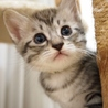 美猫6兄妹「キキ」♪ サムネイル2