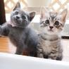 美猫6兄妹「キキ」♪ サムネイル5