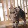 美猫6兄妹「キキ」♪ サムネイル7