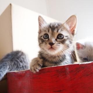 美猫6兄妹「ララ」♪