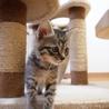 美猫6兄妹「ララ」♪ サムネイル2