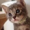 ※トライアル中です、美猫6兄妹「ルル」♪ サムネイル2