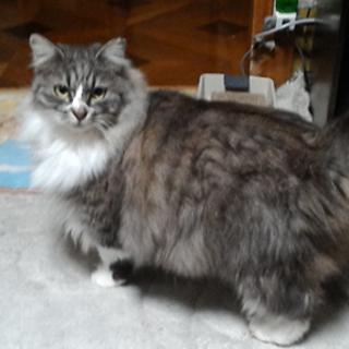 推定3才くらいの超美猫ちゃん♪