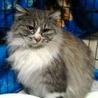 推定3才くらいの超美猫ちゃん♪ サムネイル2