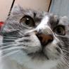 推定3才くらいの超美猫ちゃん♪ サムネイル3