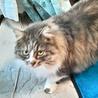 推定3才くらいの超美猫ちゃん♪ サムネイル6