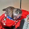 推定3才くらいの超美猫ちゃん♪ サムネイル7