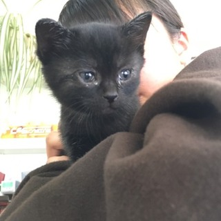 釧路市内限定です  仔猫 黒 ピンク
