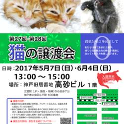 """猫の譲渡会in神戸三宮 """" 猫のミーナ"""""""