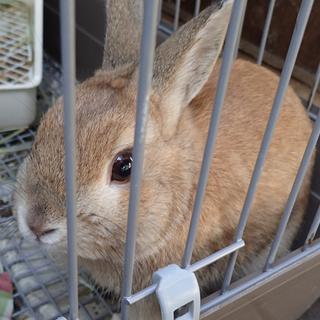 自宅で飼っている若いウサギ(オス)です