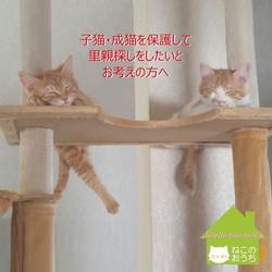 参加猫ちゃん募集★ミャオ!ねこのおうち