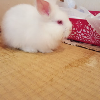 白色のウサギです!