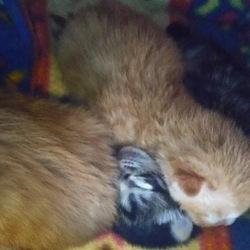 子ネコ、産まれました(続き)
