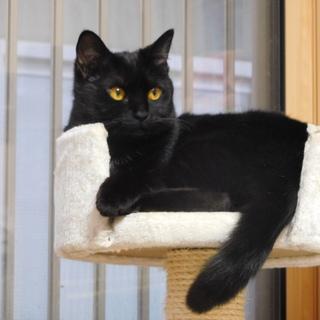 かわいい黒猫の女の子の木の実ちゃん