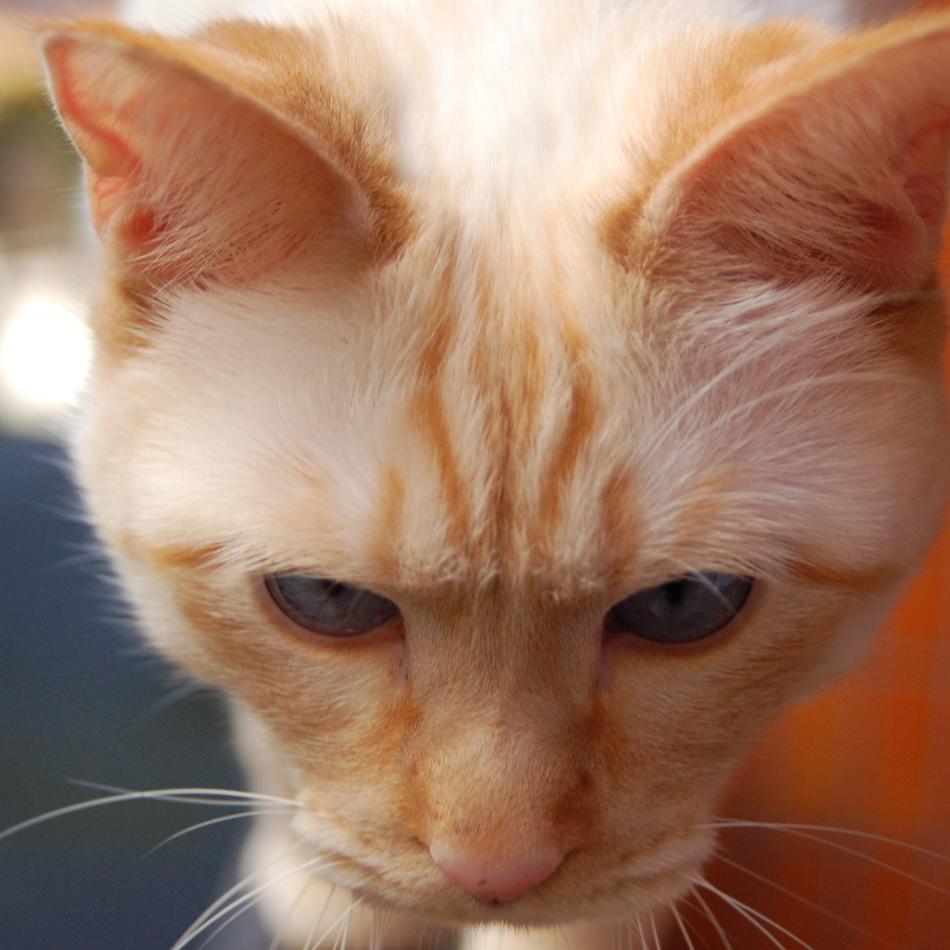 バニラのカバー写真