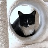 つんでれ甘えん坊 スタイル抜群美猫 サムネイル4