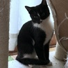 つんでれ甘えん坊 スタイル抜群美猫 サムネイル5