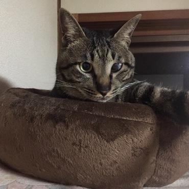 自撮り猫、びぃくん♡