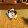 三毛猫にゃ〜す