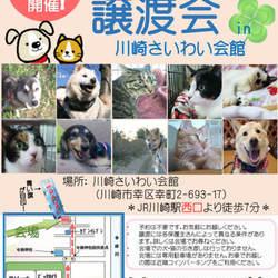 RADAC 定例犬猫譲渡会 (in神奈川県川崎市)