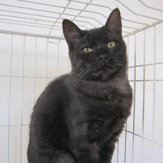 動画あり さみしがりやの黒猫ちょろ松君