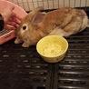 白色のウサギです! サムネイル6