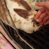 白色のウサギです! サムネイル7