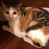 姉御肌な綺麗なキジミケの女の子 サムネイル5