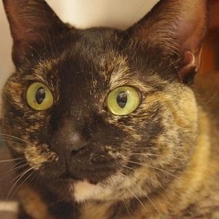 高齢猫のため、高齢応募者歓迎です(諸条件あり)