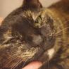 高齢猫のため、高齢応募者歓迎です(諸条件あり) サムネイル3
