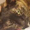 高齢猫のため、高齢応募者歓迎です(諸条件あり) サムネイル4