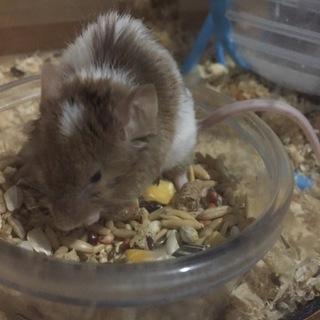 テディマウスの赤ちゃん