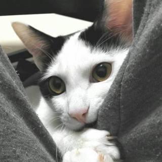 ウルトラ甘えたさんのストーカー美猫さんです。