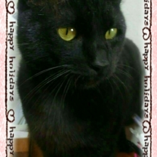 人に慣れた黒猫ちゃんです