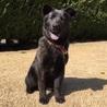 生後6ヶ月の人大好きな甲斐犬mix サムネイル2