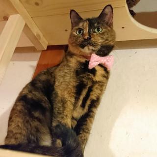 ちょっとツンデレの可愛いサビ猫!イブちゃん♬