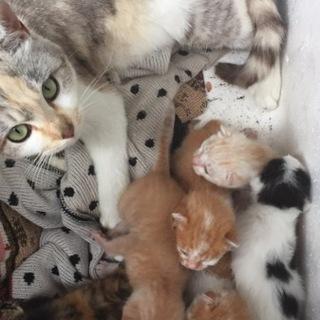 子猫6匹の里親募集(誤って退会してしまった)