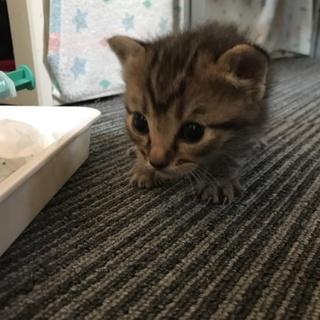 ①命繋がれた仔猫達、ずっとのおうちを探しています。