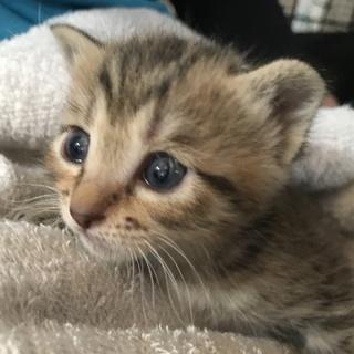 ③命繋がれた仔猫達、ずっとのおうちを探しています。