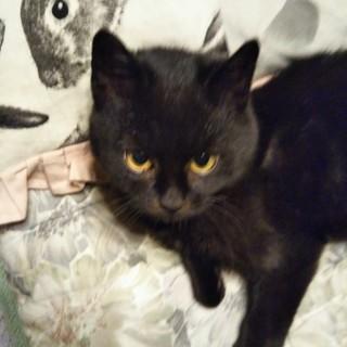 昨年秋生まれの黒猫ちゃん