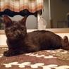 千葉県白井市より、黒猫の女の子です✡️ サムネイル3