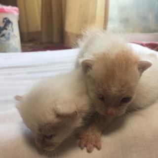 2匹の子猫の里親募集中です!