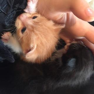生後一ヶ月のかわいい子猫