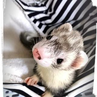 1歳♂シルバーミット