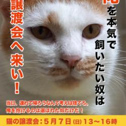 江戸川区多頭飼育崩壊した猫たちの譲渡会 サムネイル1